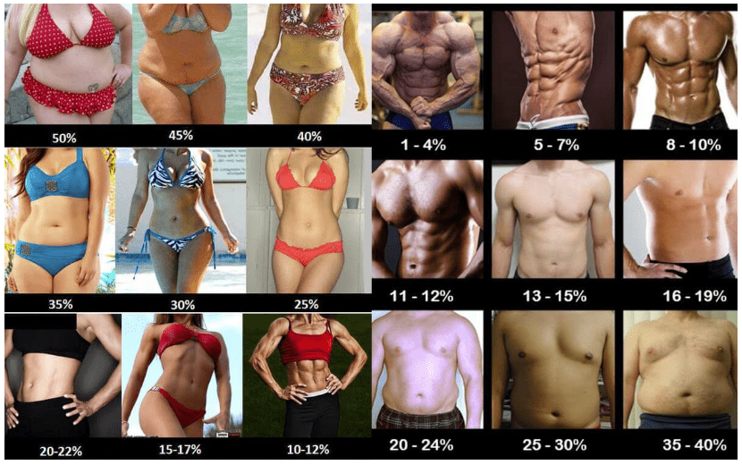 body fat examples for men and women